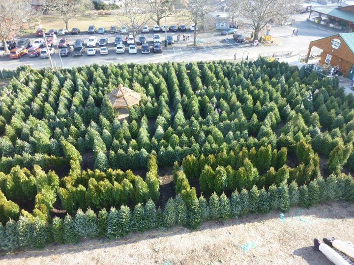 Linvilla Christmas Tree Maze