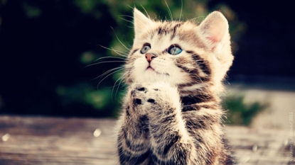 kitten-praying-31