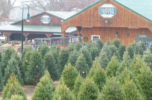 Linvilla-Orchards-Christmas-Tree-Farm-680uw