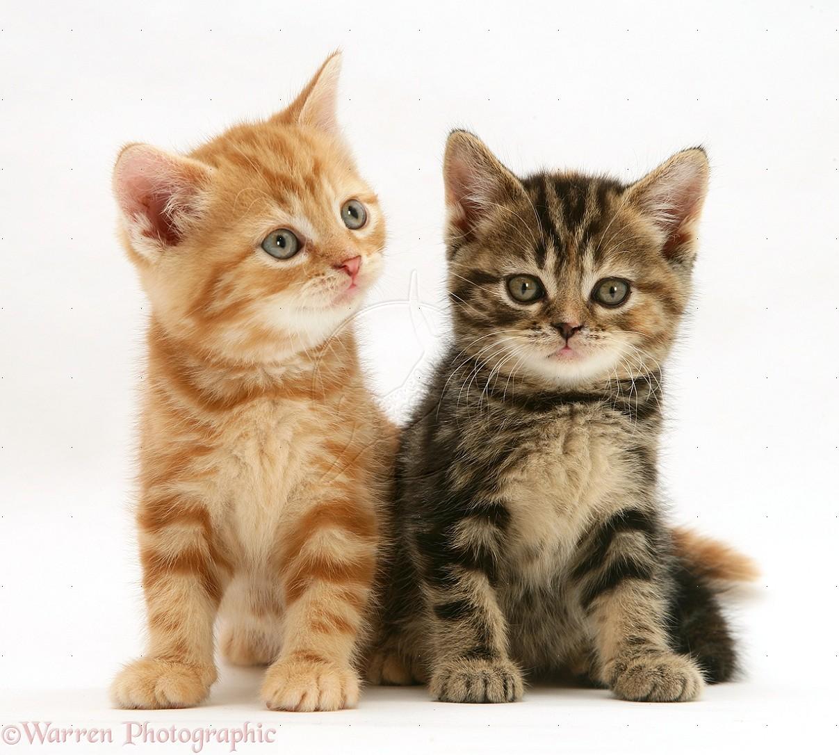 kitten breath smells like poop
